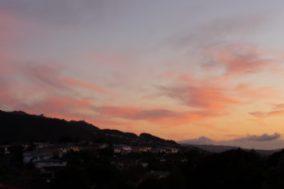 Sunrises, Spring, Kowhai and Tuis